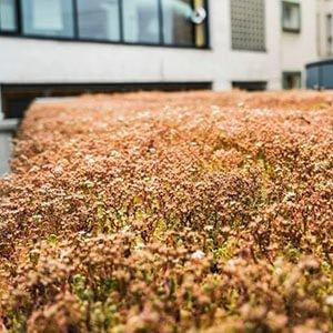 What's So Great About Sedum Green Roofs?